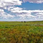 Grasslands - ab in die Weite