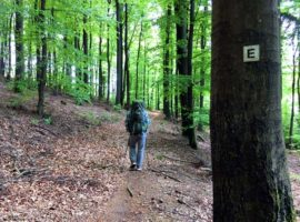 Eselsweg bei Rohrbrunn