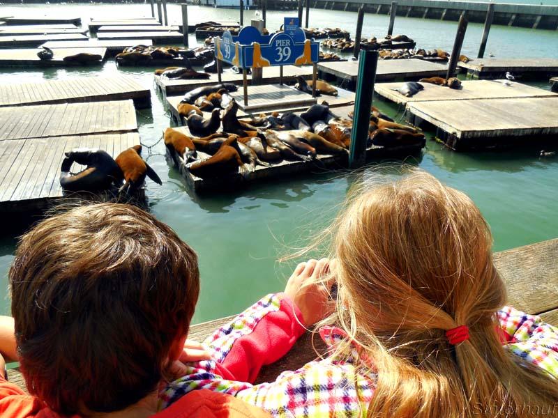 Seelöwenkolonie am Pier 39