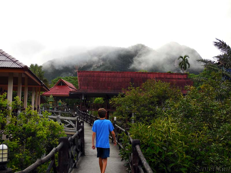 Der Dschungel am Morgen