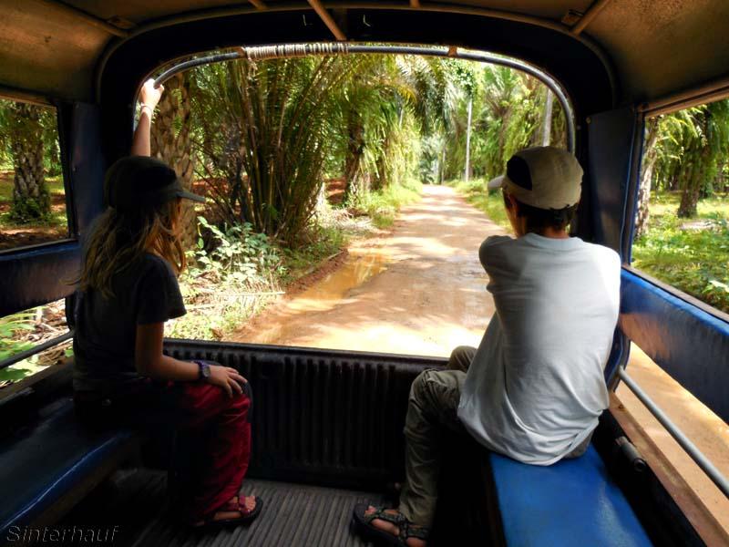 Mit dem Pick-up durch den Dschungel