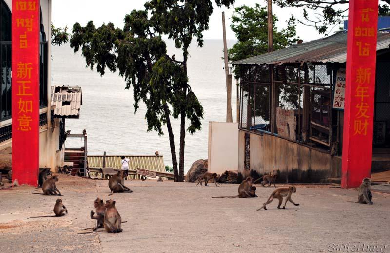 Affen in Khao Lat